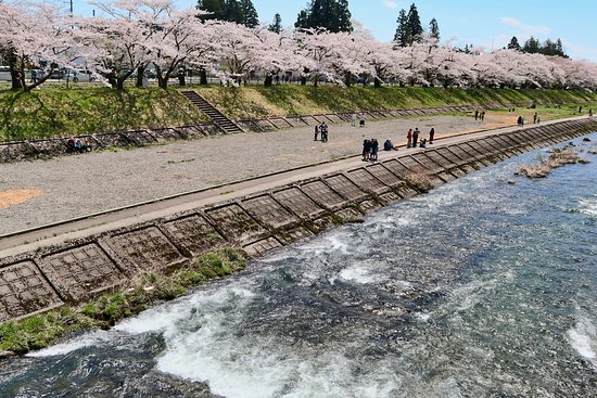 川面と緑の川堤とピンクの桜