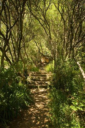Jardin Du Domaine D'orvès: The trail to the house