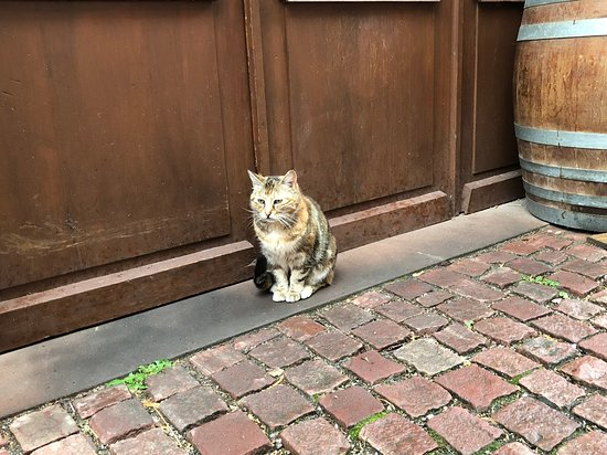 Vieille Ville: 猫がいる