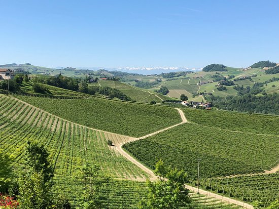 Massolino Winery