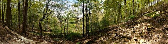 Devil's Punchbowl Conservation Area: woods