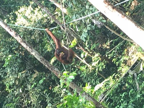 Semenggoh Nature Reserve – fénykép
