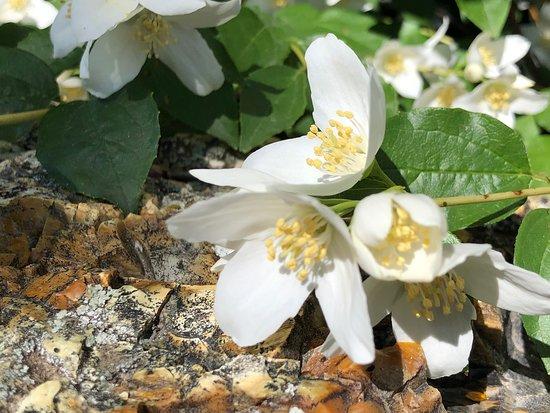 Beautiful spring day at the Idaho Botanical Garden.
