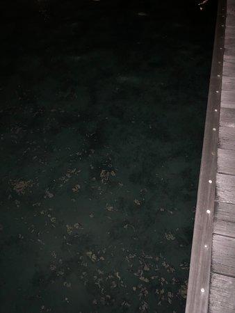 Mare sporco....cibo non all'altezza...