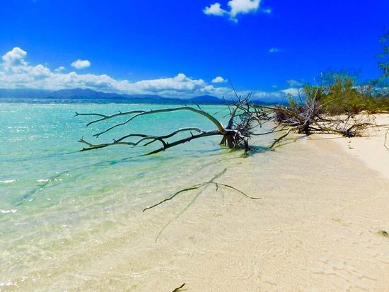 Signal Island Turtle Tour from Noumea: Beautiful beach and water