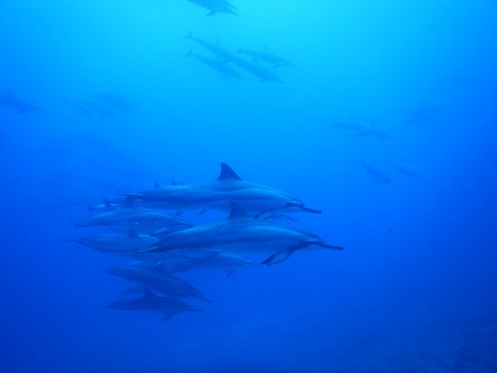 Dolphins swimming by while we were at 60-70 ft.