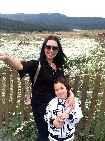 Ромашковое поле, за забором гуляют утки,гуси, которые громко требуют пищу)