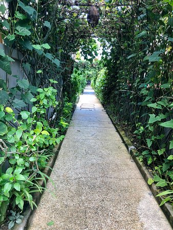 The green patway to the Villa Carissa.