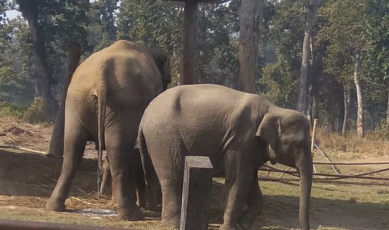 Chitwan National Park is real home of different animals.We can visit and observe their activities without disturbing.Elephant is one of them