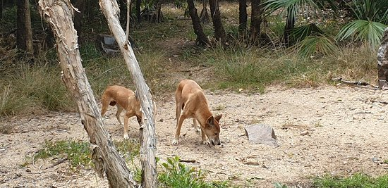 Territory Wildlife Park: So much to see and do, knowledgeable staff and very friendly.