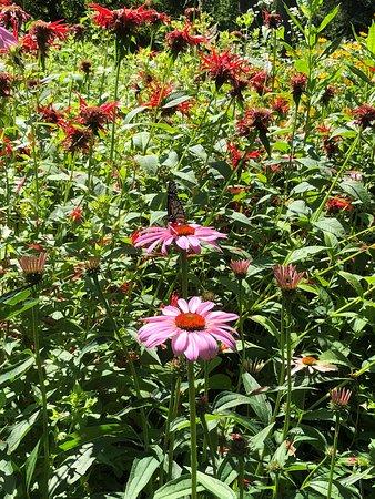 Summer pollinator garden