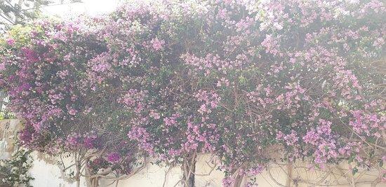 Los Cristianos, Španělsko: Los Cris in Bloom