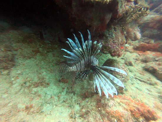 Ultra Marine Divers: Lion Fish