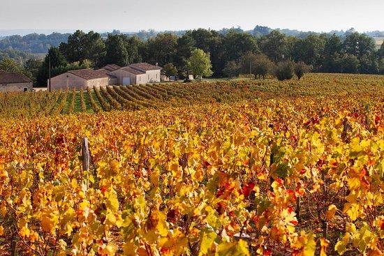 Saint-Philippe-D'Aiguille, Francja: La vigne en automne @chateauroquevieille