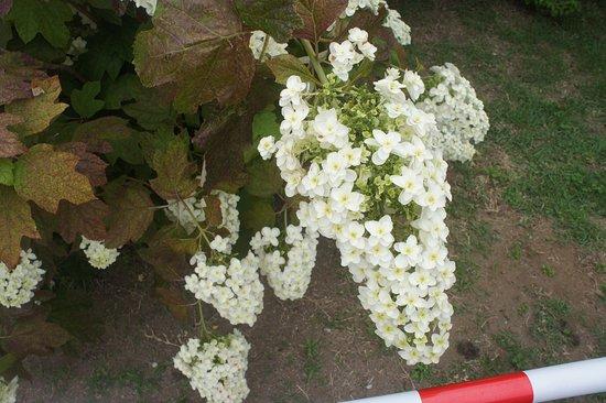 この花もたくさん咲いていました