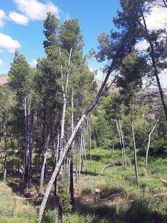 Ferez, Spania: Parque