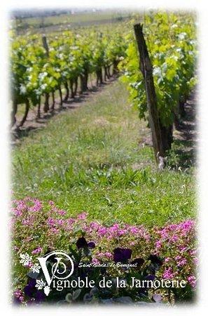 Vignoble de la Jarnoterie: Une parcelle de Vignes...