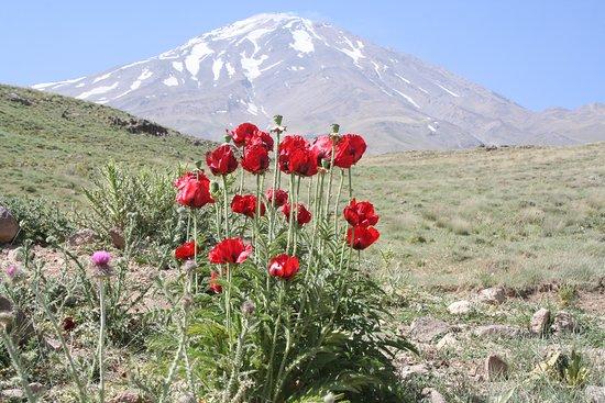 Amol, Iran: Mont Damavand