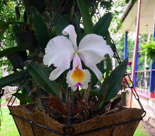Villeta, Kolumbien: orquideas