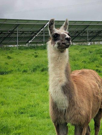 Llama Lland: Loved every minute