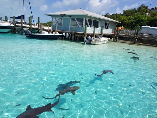Staniel Cay: #StanielCayAdventures