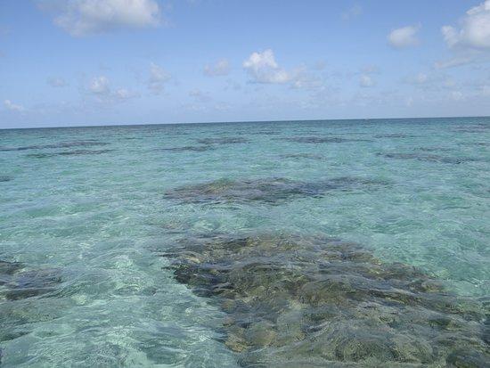 Corais.