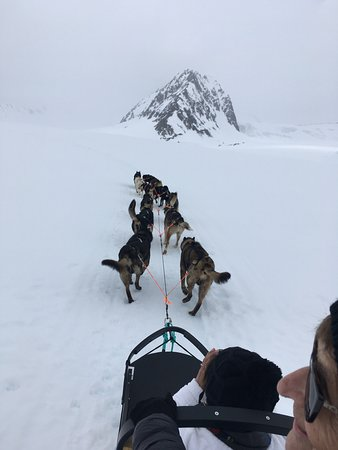 Snowhook Adventure Guides of Alaska: Dog's are having a great time.