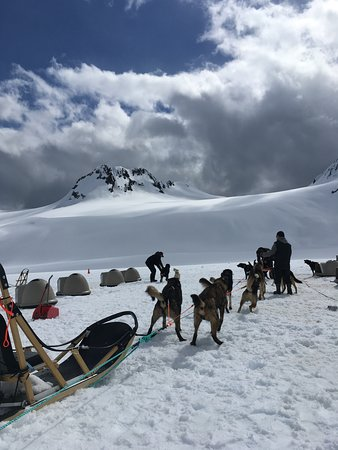 Snowhook Adventure Guides of Alaska: Dog's are getting ready