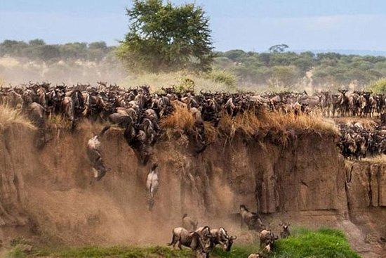 来自NAIROBI的MASAI MARA私人SAFARI过夜