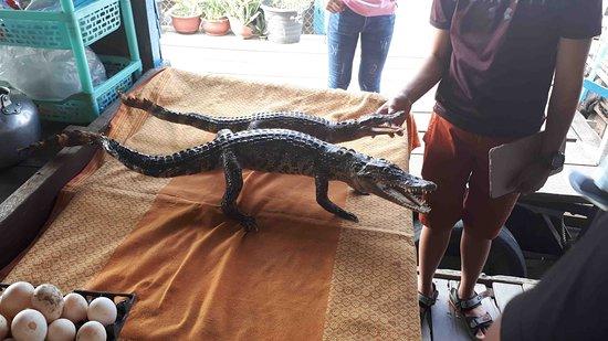 The Tonle Sap Experience: The Tonle Sap Lake 