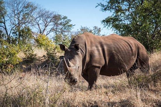 Hvit Rhino Walk i Mosi oa Tunya