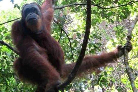 DIVERTIMENTO Trekking nella giungla