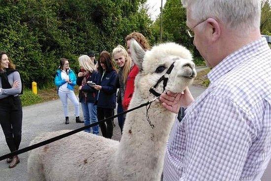 Hilltop Farm Alpacas. Visita y trae...