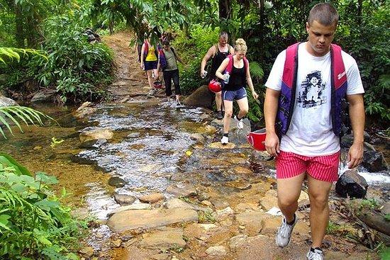 Dagstur på Kitulgala Rain Forest...