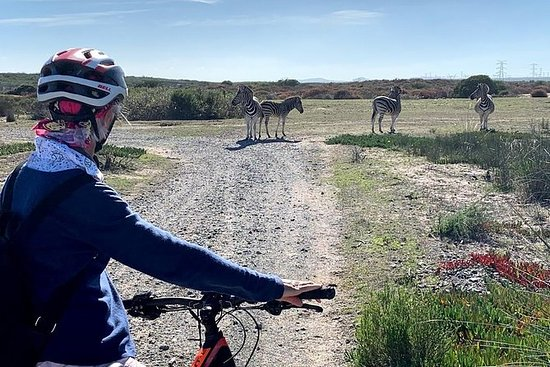 West Coast Wildlife Ebike Tour - Møt...