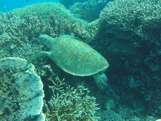 Somer Dive Center: 嗯嗯嗯