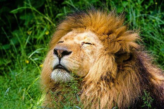 Gooty Safaris