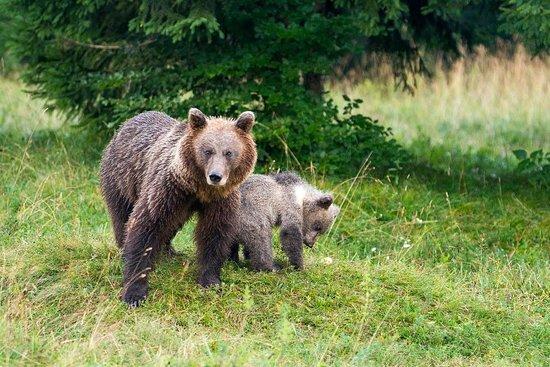 Bears & Wildlife