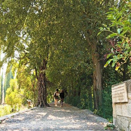 Pause nature ⏸ Le jardin des plantes, un havre de verdure en plein cœur de la ville ! 🌳🌺🍀