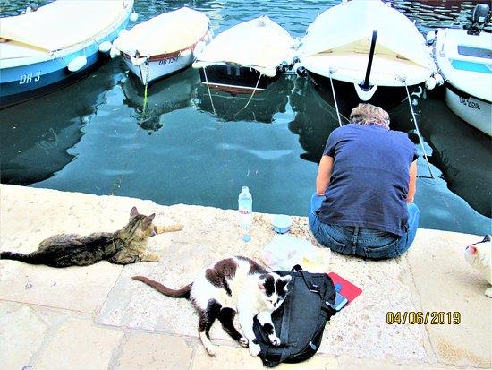 Dubrovnik, Kroatien: Fish for lucky kitties
