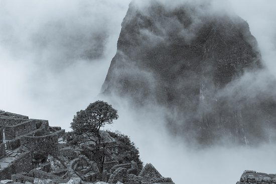 Santuario Historico de Machu Picchu: Lone tree amid ruins and swirling fog