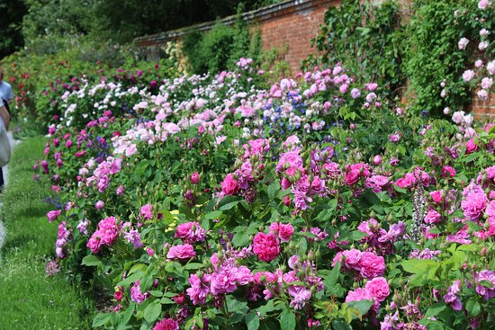 Part of the rose garden