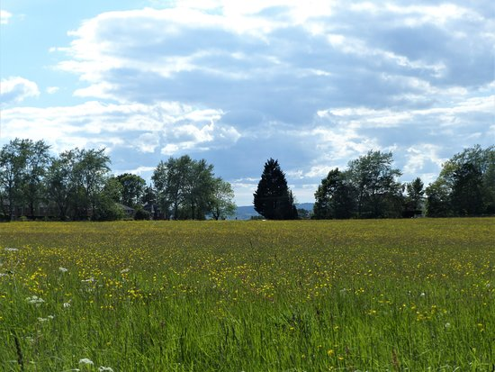 Worcestershire, UK : The beautiful 'heath' is across the road from The Dewdrop Inn and makes for a lovely afternoon stroll.