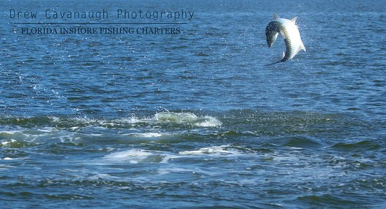 Tarpon fishing near Orlando and Kissimmee, Disney. The Silver King in action after being hooked by a client.