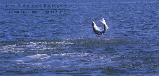 Tarpon fishing is some of the best sport fishing there is on the planet. This is what you get when you hook into one.
