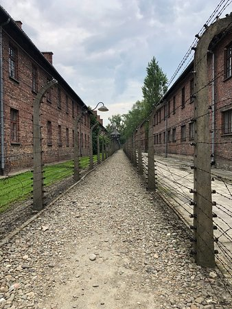 Auschwitz-Birkenau Memorial and Museum Guided Tour from Krakow: Fences, which were electrified when the camps were in use