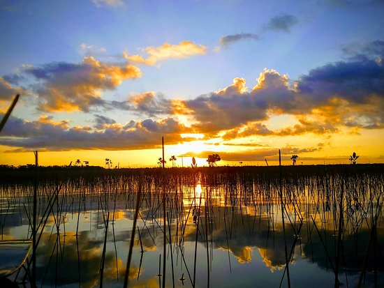 Jenny's Eco Everglades Wilderness Tours