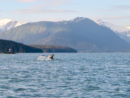 Private Small Group Whales and Wilderness Exploration Fotografie