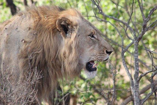 Ingungumbane Trails and Safaris
