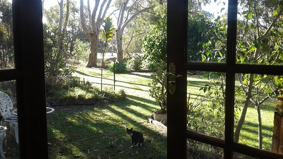 Vasse, ออสเตรเลีย: Looking out the bedroom french doors overlooking 5 acre property